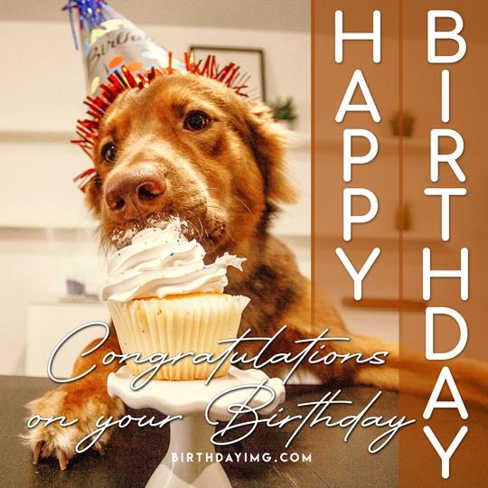 Free Funny Happy Birthday Image with Dog and Cake - birthdayimg.com