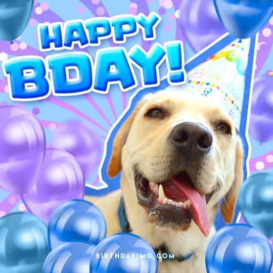 Free Funny Happy Birthday Image with Dog - birthdayimg.com