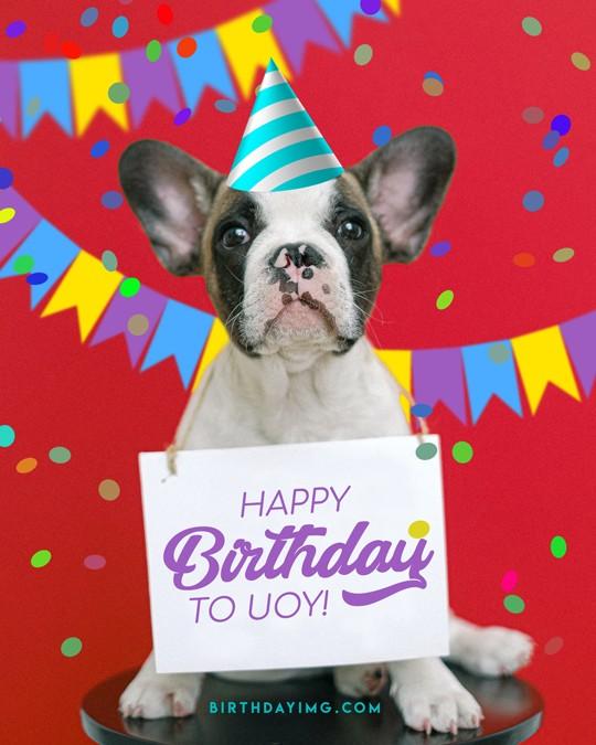 Free Creative Happy Birthday Image With Dog - birthdayimg.com