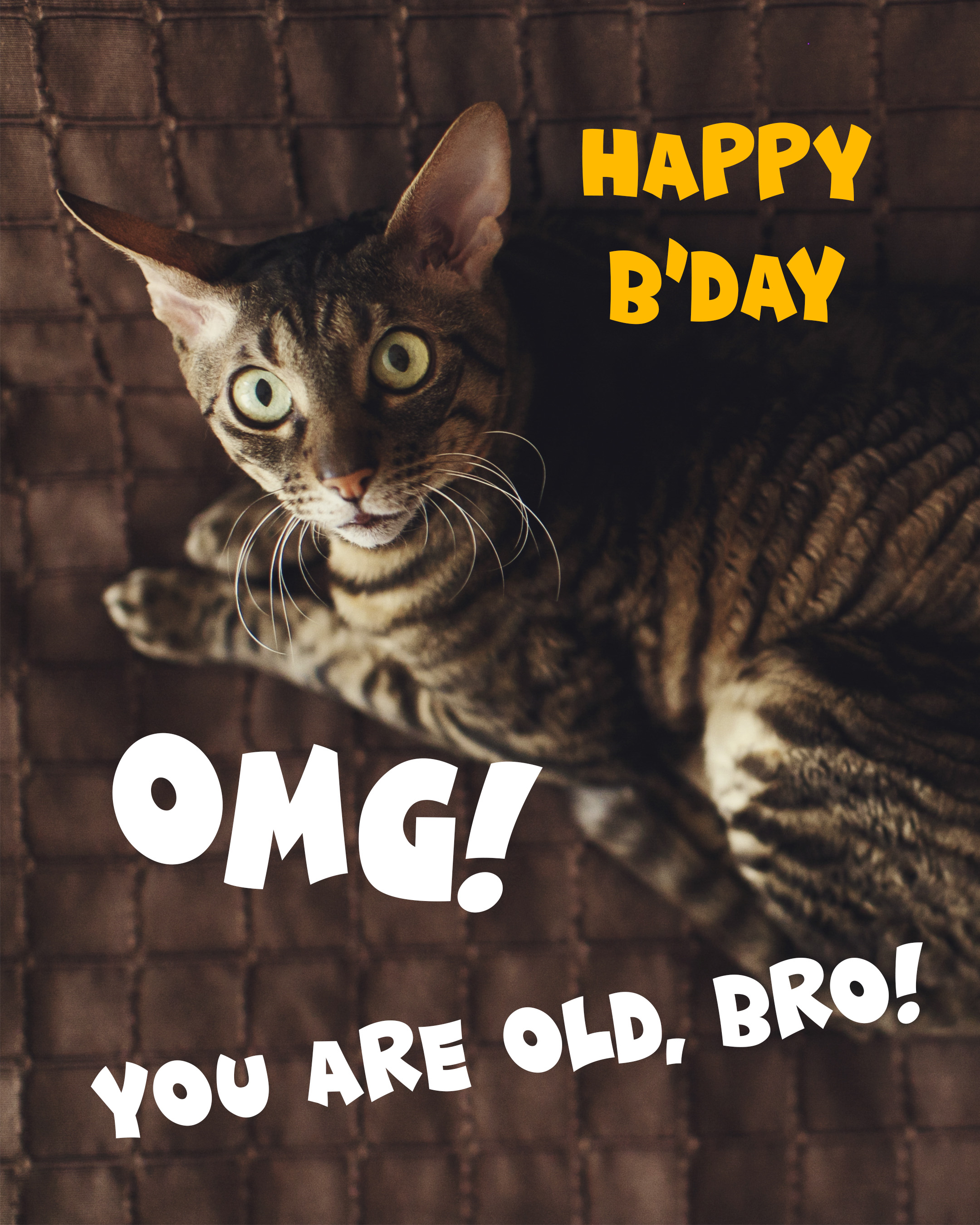 Free Funny Happy Birthday Image For Brother With Cat - birthdayimg.com