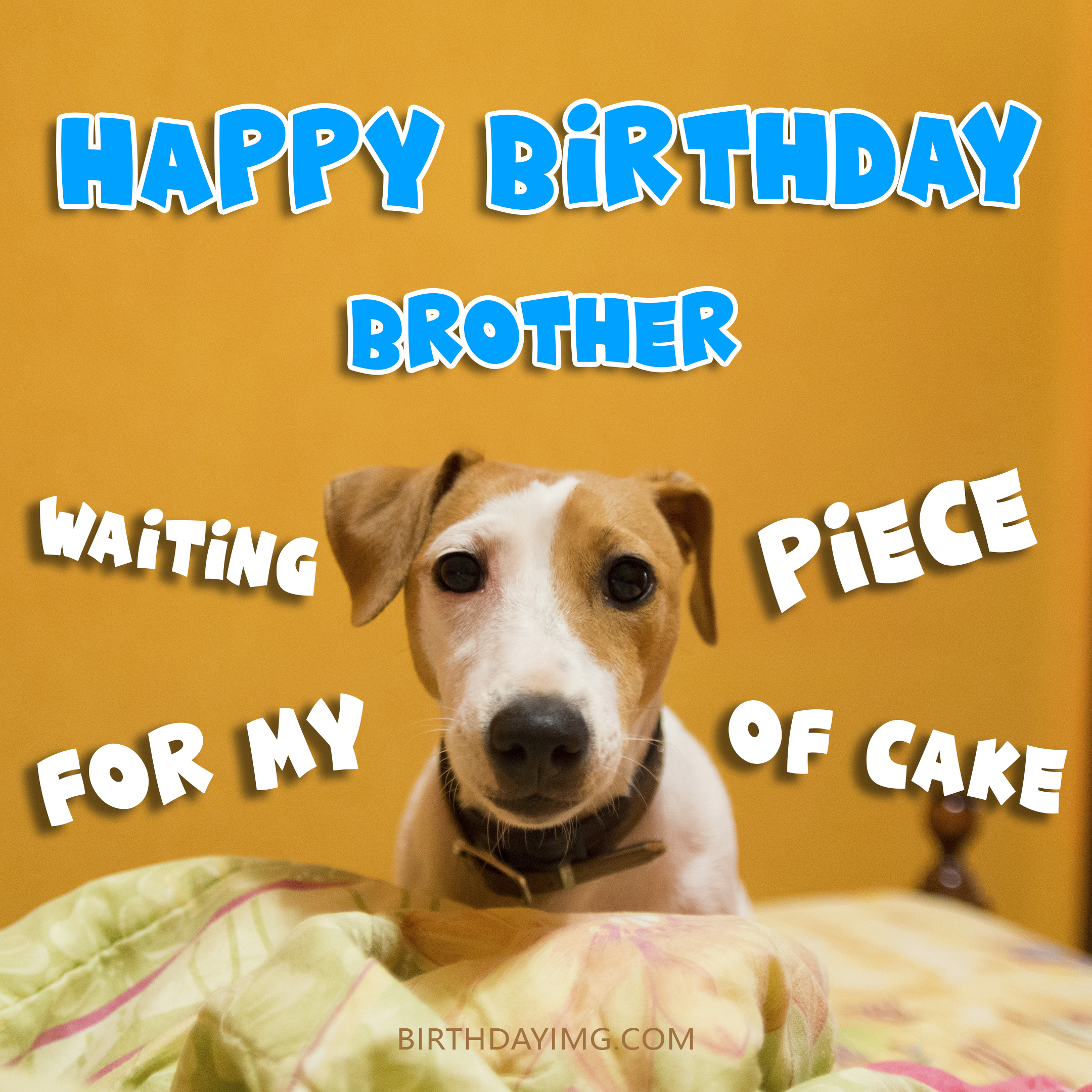 Free Funny Happy Birthday Image For Brother With Ginger Dog - birthdayimg.com