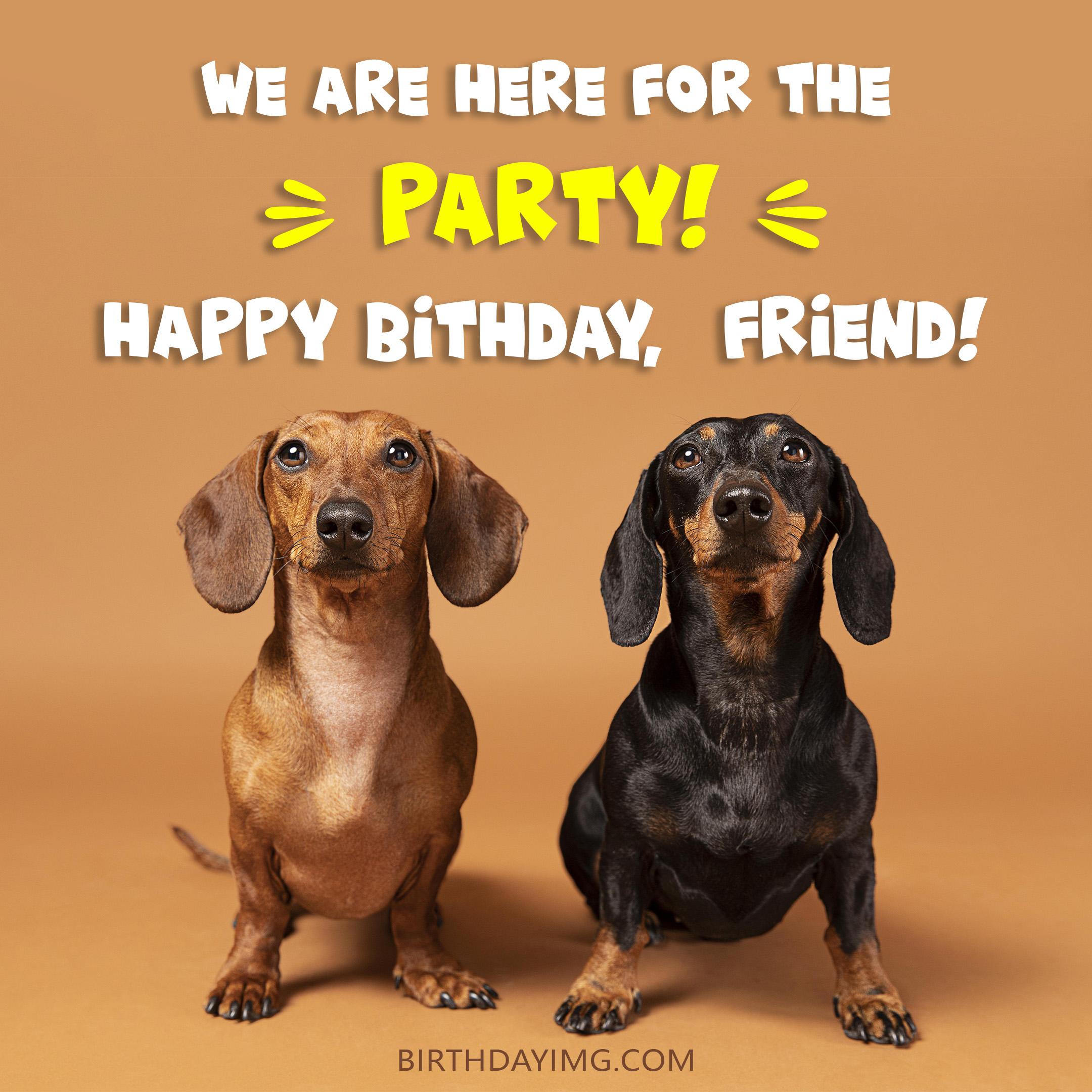 Free Friend Happy Birthday Image With Funny Dachshunds - birthdayimg.com