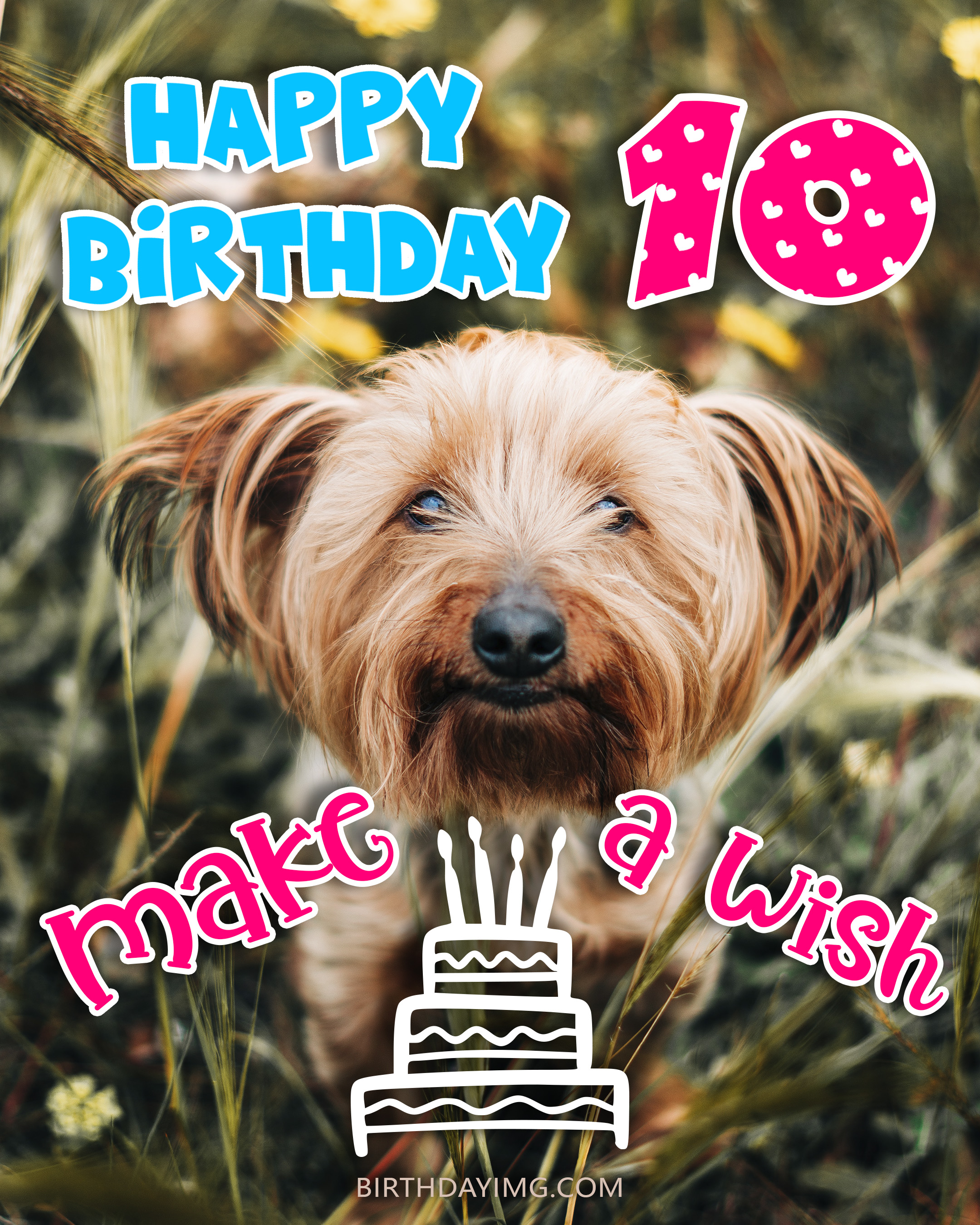 Free 10th Years Happy Birthday Image With Cute Dog and Cake - birthdayimg.com