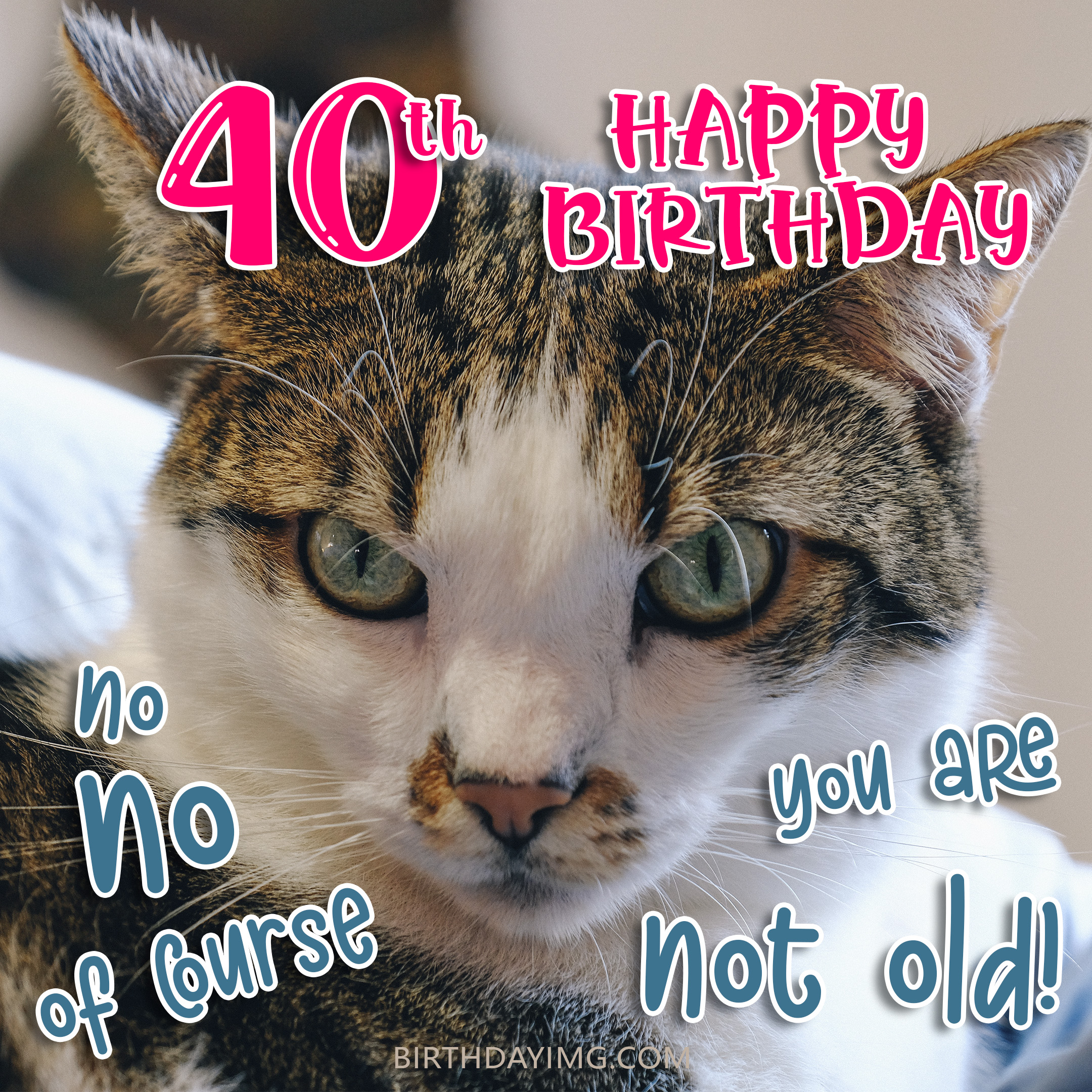 Free You Are Not Old 40th Years Happy Birthday Image With Cat - birthdayimg.com