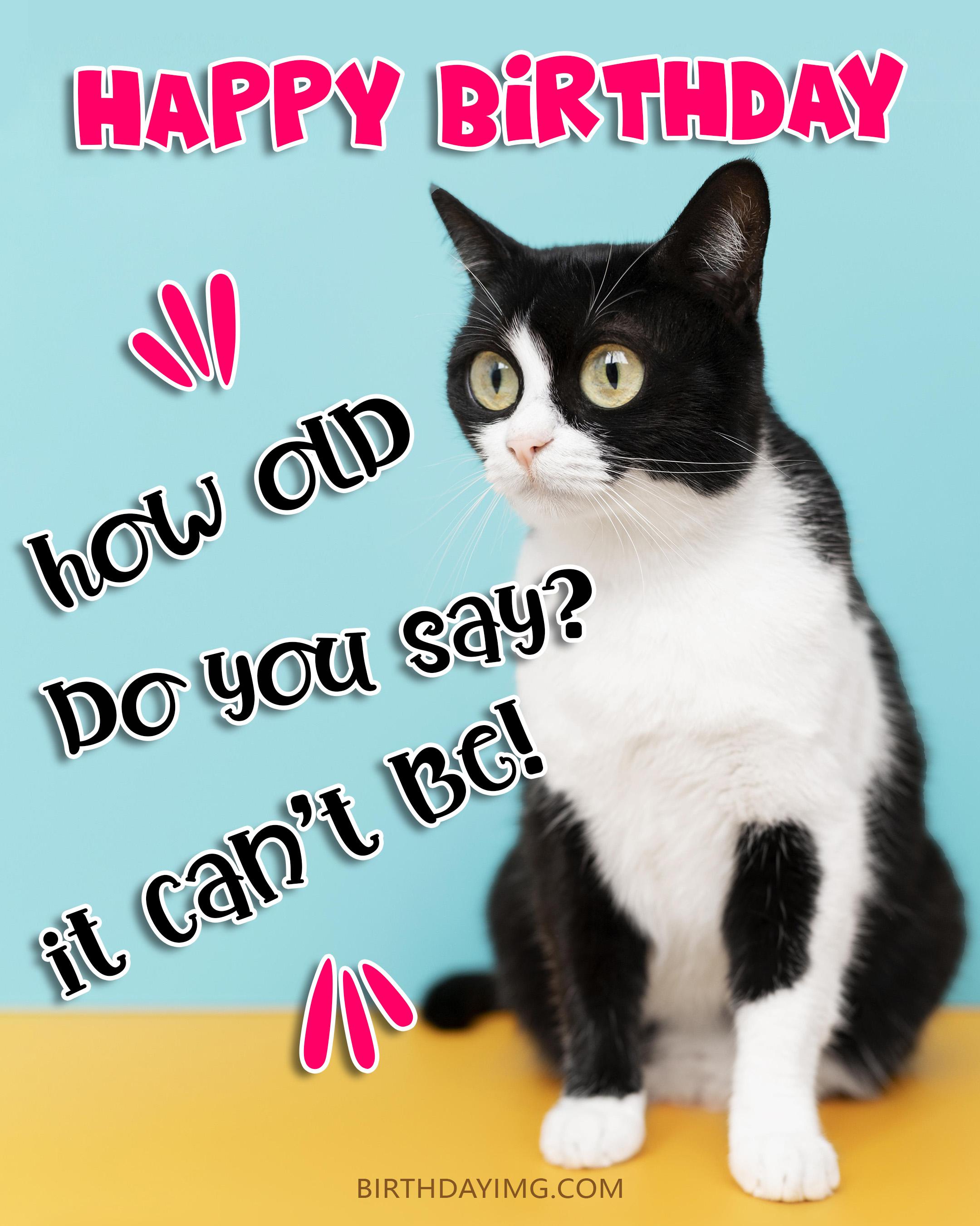 Free Funny Happy Birthday Image With Black and White Cat - birthdayimg.com