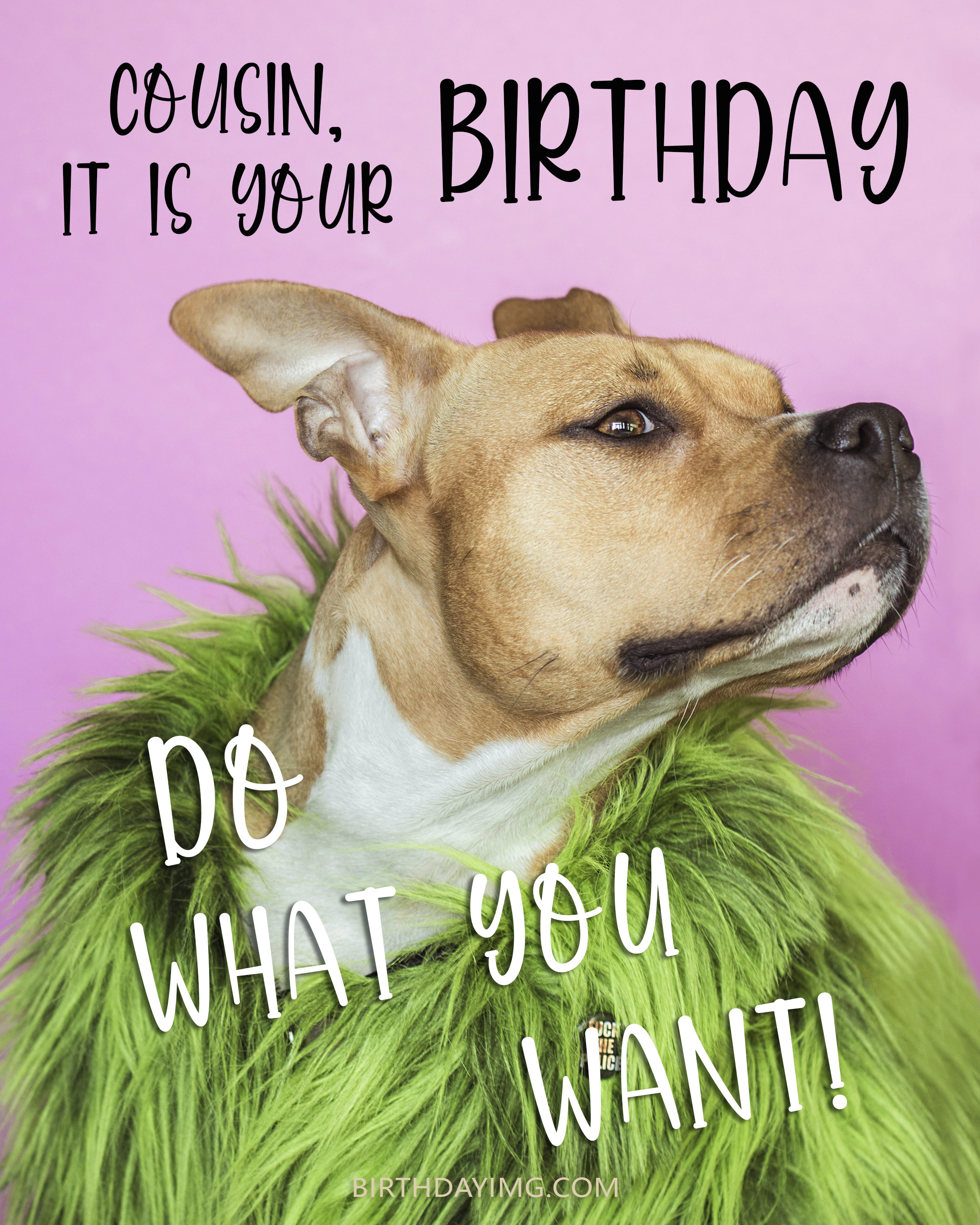 Free Birthday Image For Cousin With Dog on Pink Background - birthdayimg.com