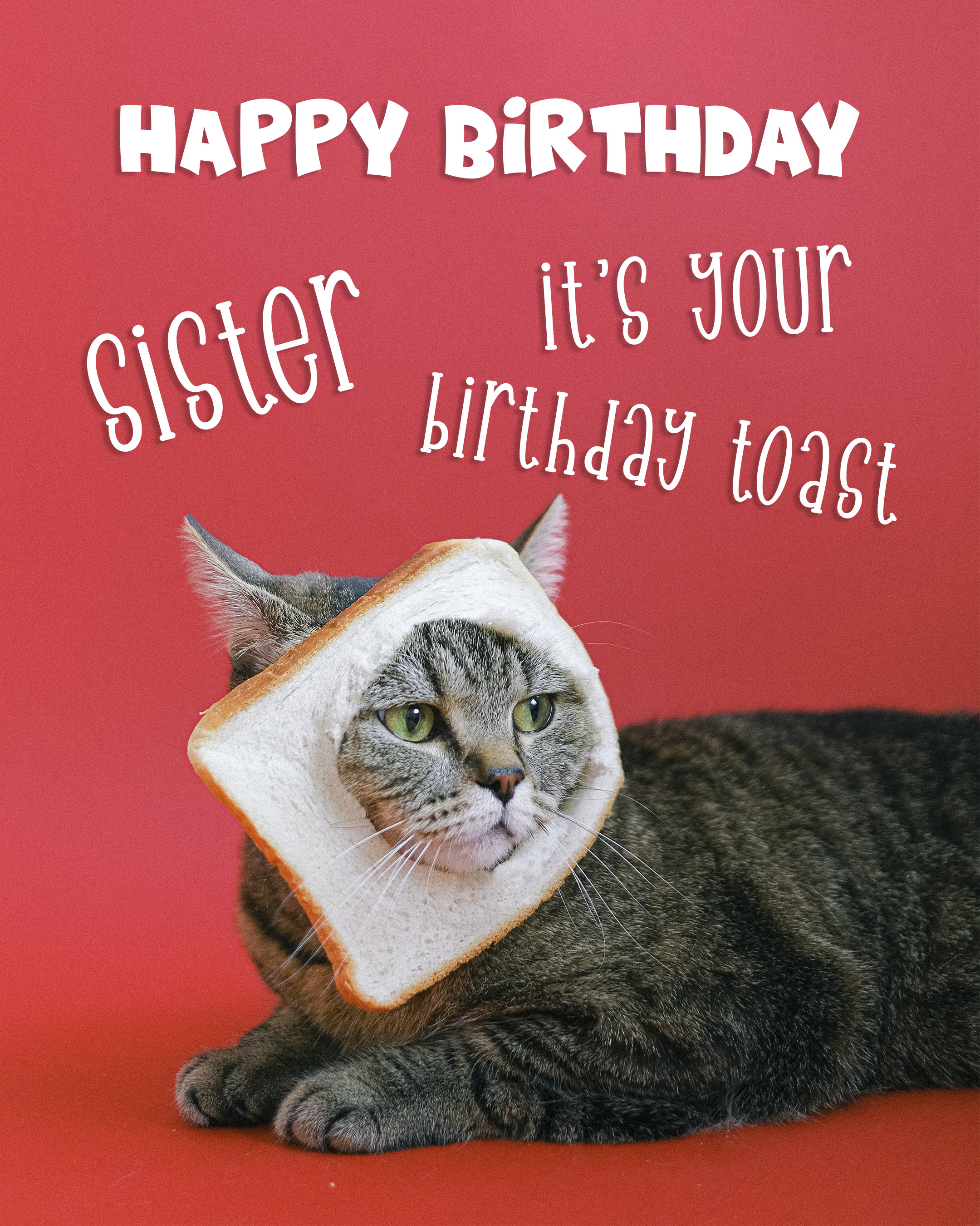 Free Happy Birthday Image For Sisters With Funny Cat - birthdayimg.com