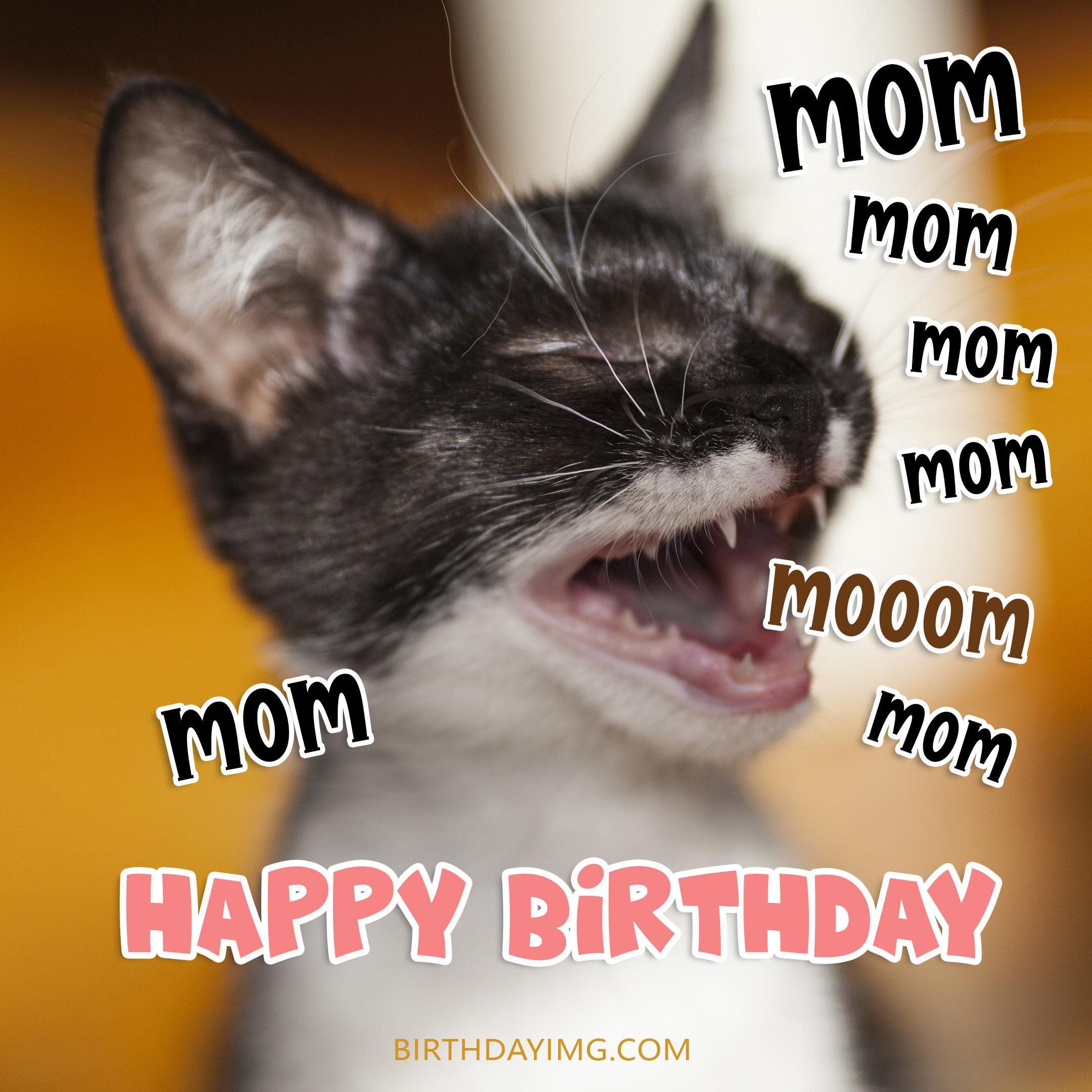 Free Funny Happy Birthday Image For Mom With Cat - birthdayimg.com