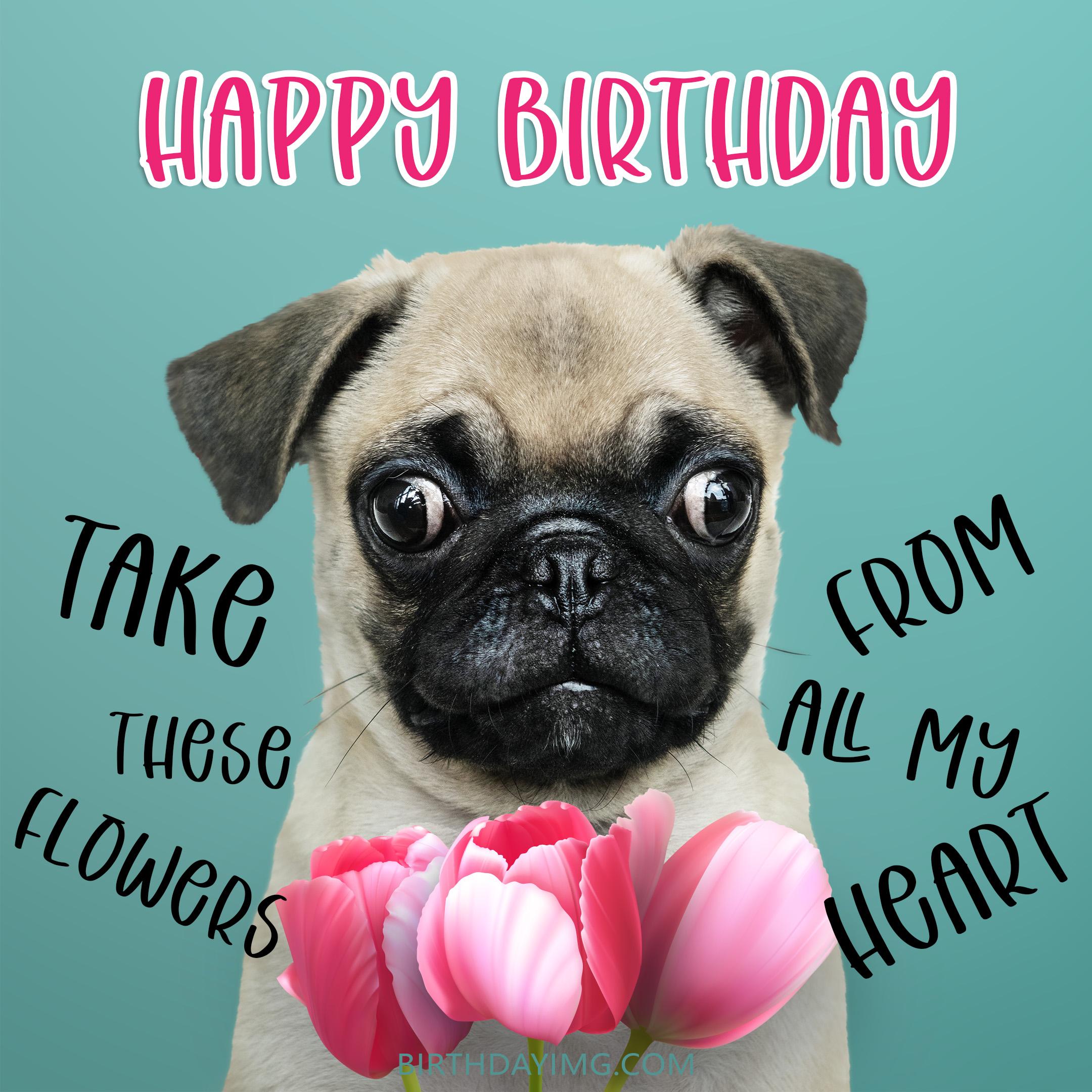 Free Funny Happy Birthday Image With Flowers And Dog - birthdayimg.com