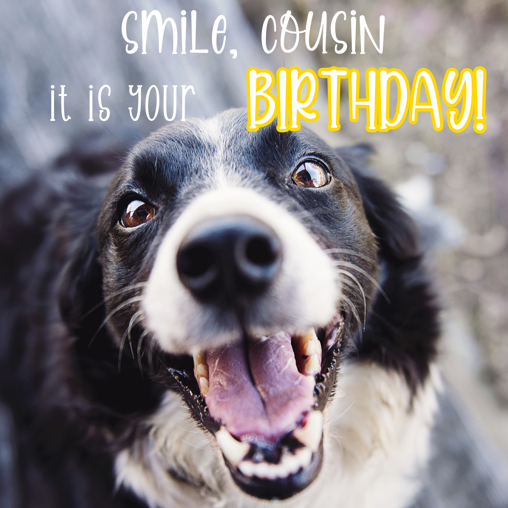 Free Funny Happy Birthday Image For Cousin With Dog - birthdayimg.com