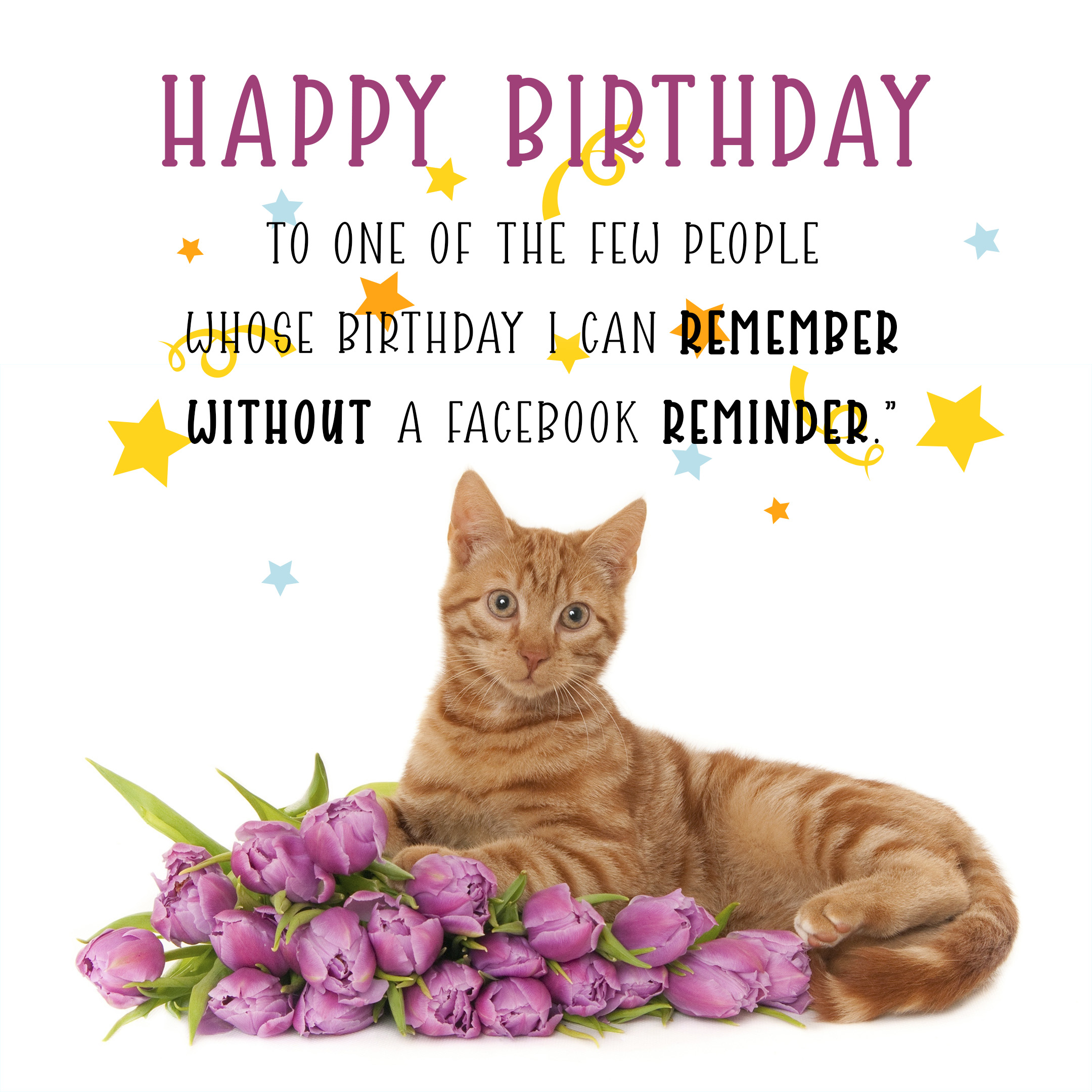 Free Funny Happy Birthday Image With Flowers And Cat - birthdayimg.com