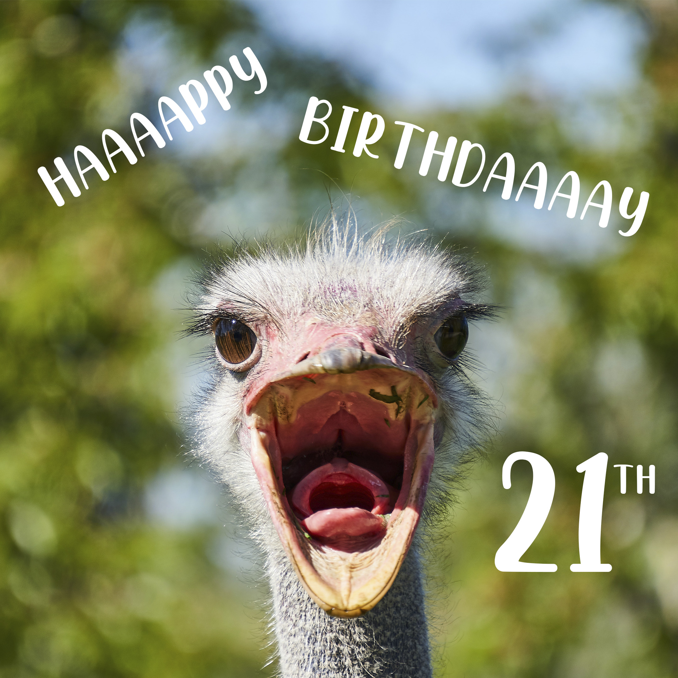 Free Funny 21th Years Happy Birthday Image With Ostrich - birthdayimg.com