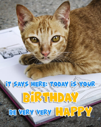 Free Funny Happy Birthday Image With Cute Red Cat - birthdayimg.com