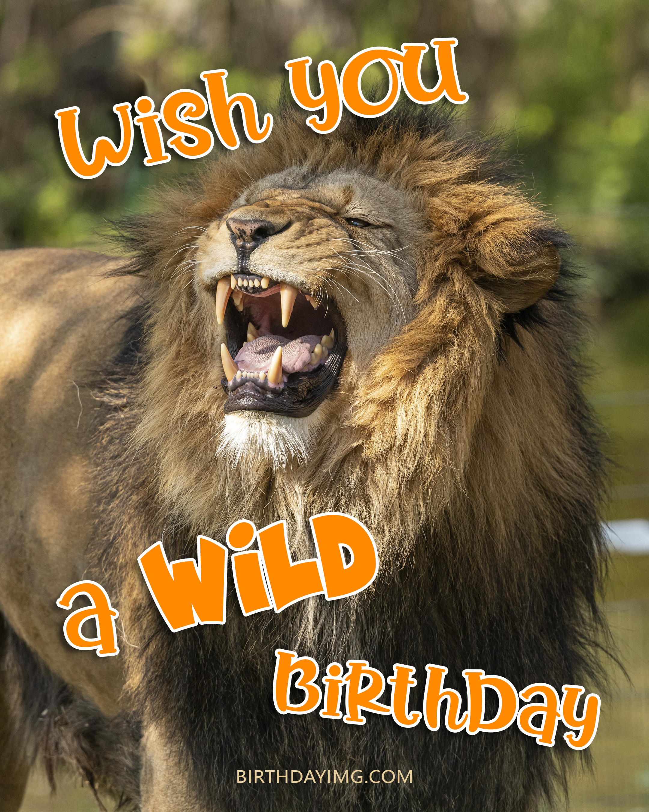 Free Funny Happy Birthday Images For Him (Man) With Lion - birthdayimg.com